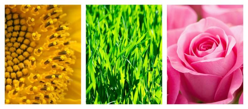 כל צבעי הקשת חלק 2 – צבעים ומשמעותם צהוב, ירוק וורוד