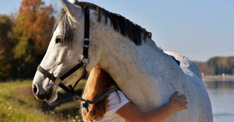 5 עובדות ששווה לדעת על קבלת מסרים מהחיות