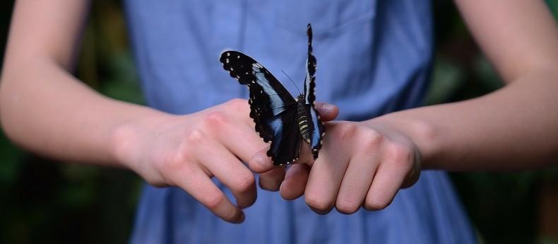 מה מסמל פרפר מאמר על טוטם הפרפר והשינוי הבלתי נמנע שמוביל ליופי ושמחה