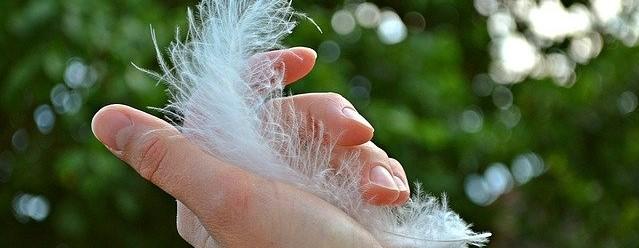 פגשת נוצה?! על נוצות ומלאכים – משמעות הנוצות השונות